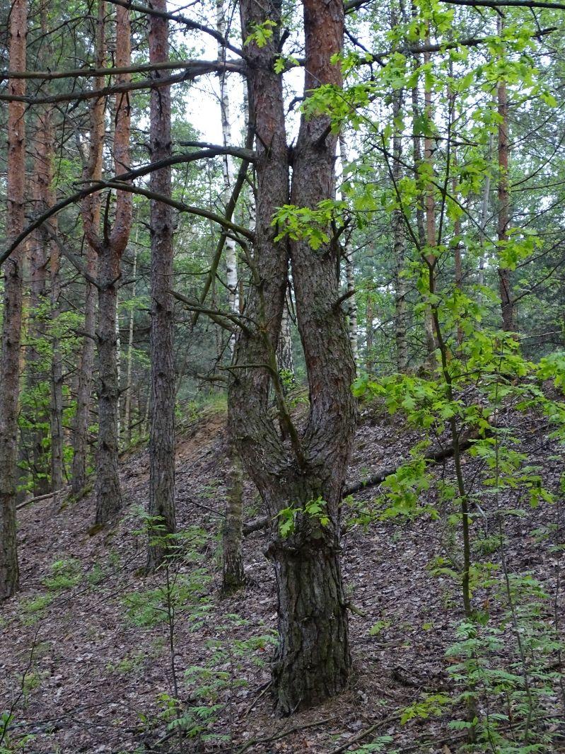 оружие только визира в лесу фото территории